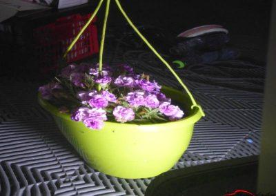 reflet fleurs après poli lustré sans peau d'orange
